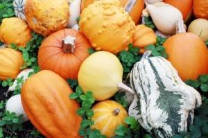 squash. pumpkin